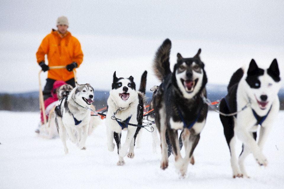 artic marathon finland