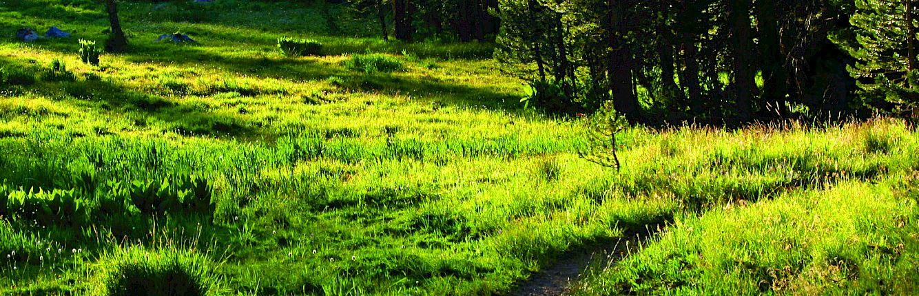 ii lx trail monsanto