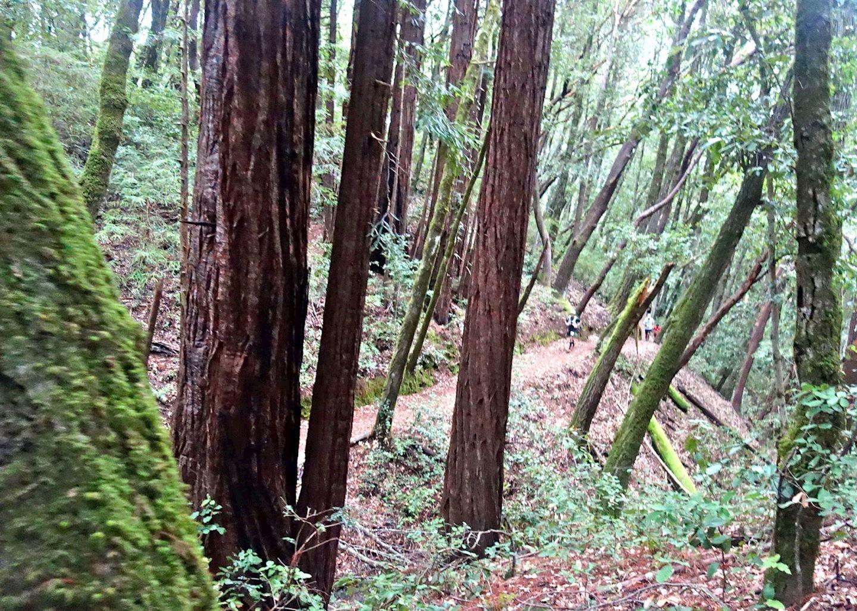 Alles over de Lost Pines Trail Run en hoe jij er aan mee kunt doen