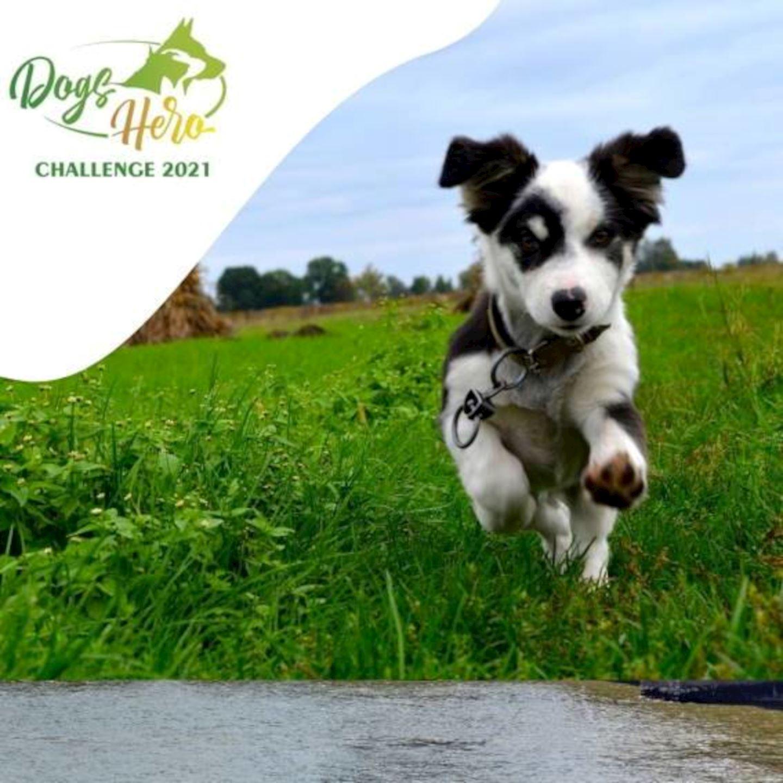 september dogs hero challenge
