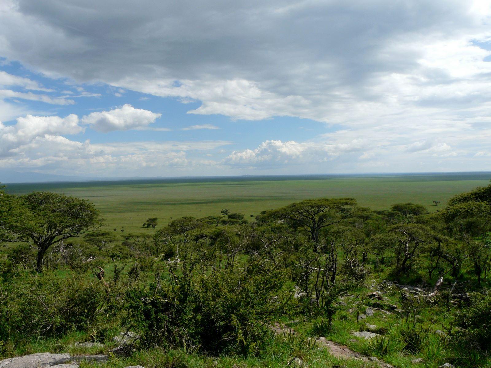 Alles over de Serengeti Marathon en hoe jij er aan mee kunt doen