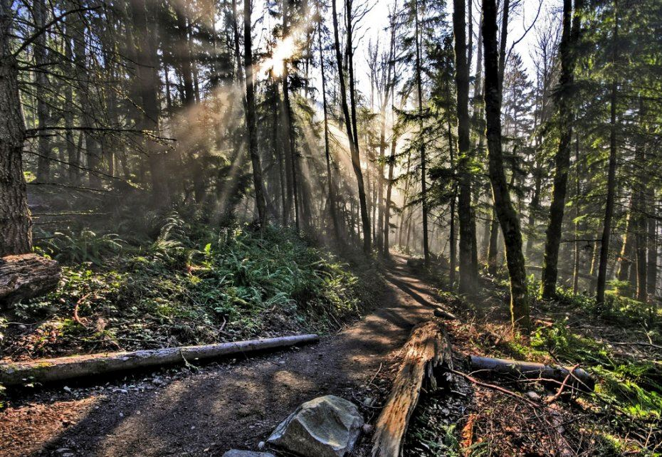 tiger mountain trail run