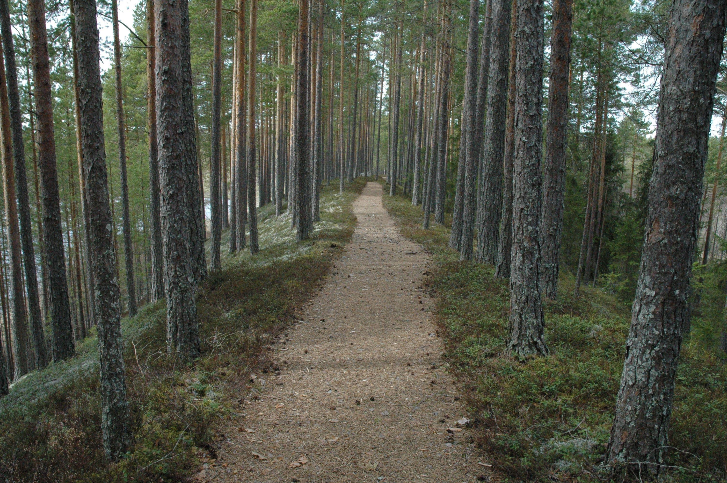 Alles over de Vansbro Marathon en hoe jij er aan mee kunt doen