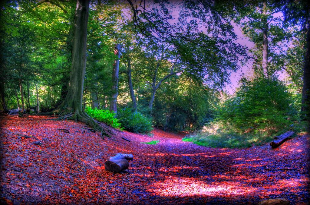 wendover woods 50