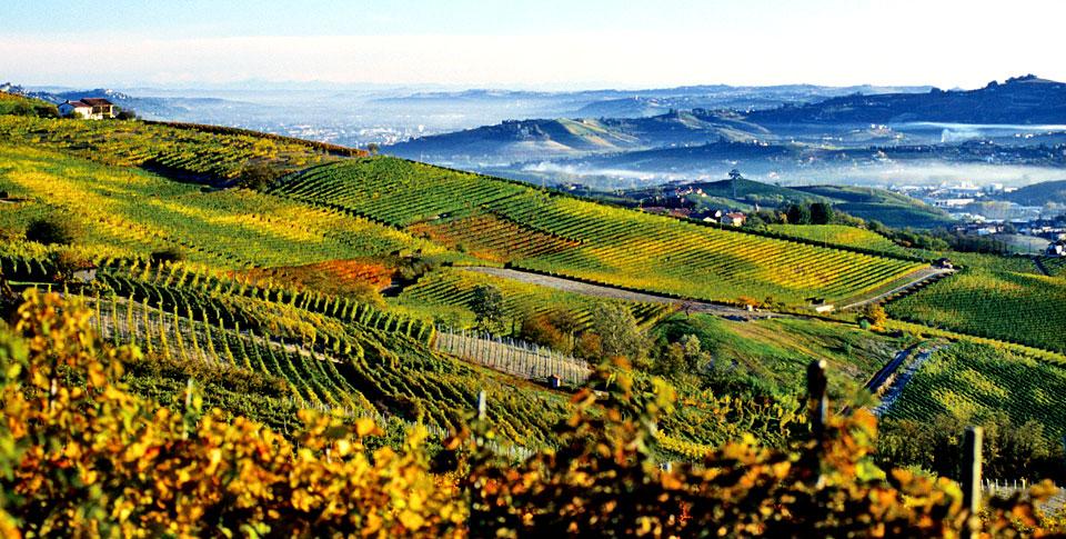 wine country runs half marathon